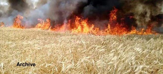 Trump Ordered Syria's Wheat Crop Burning - International Business Times